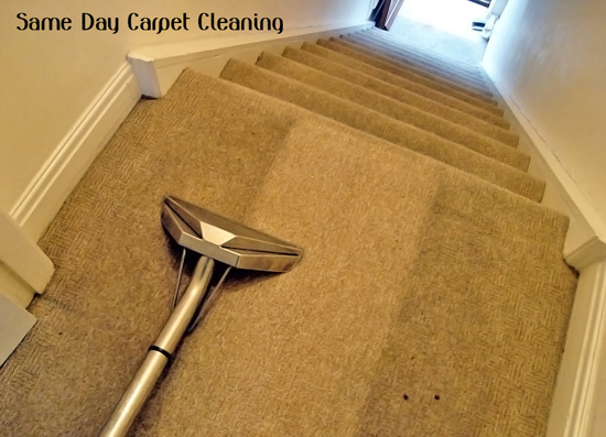 Carpet Cleaning Lemon Tree