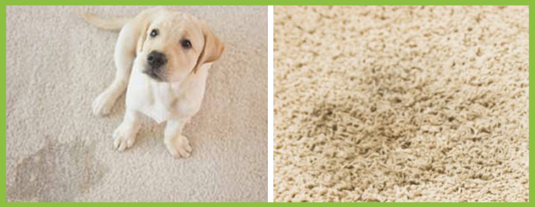How to Remove Pet Odours from Carpet
